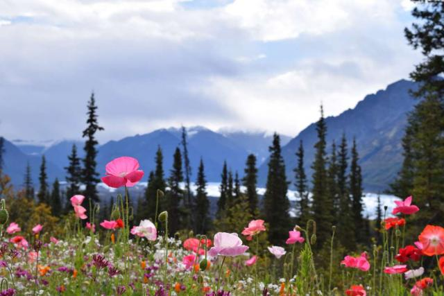 Students capture a photo of wild flowers in Alaska on their summer teen tour.
