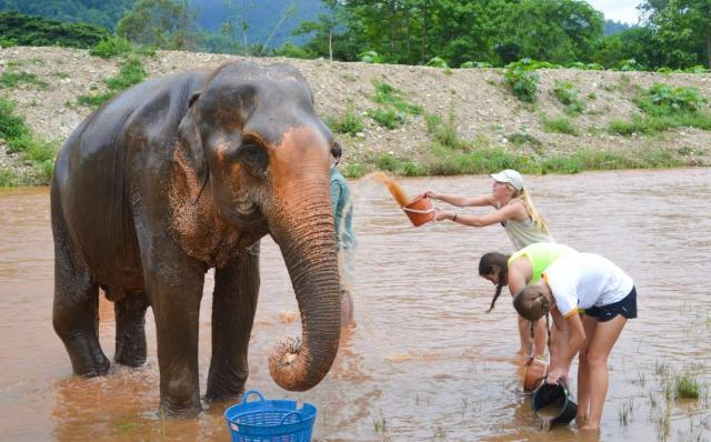 Teenage travelers wash an elephant during summer youth travel program in Thailand
