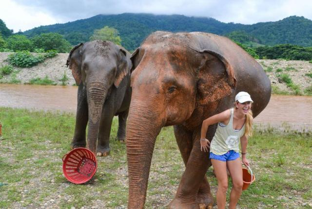 Happy teenage traveler works with elephants during summer youth travel program in Thailand