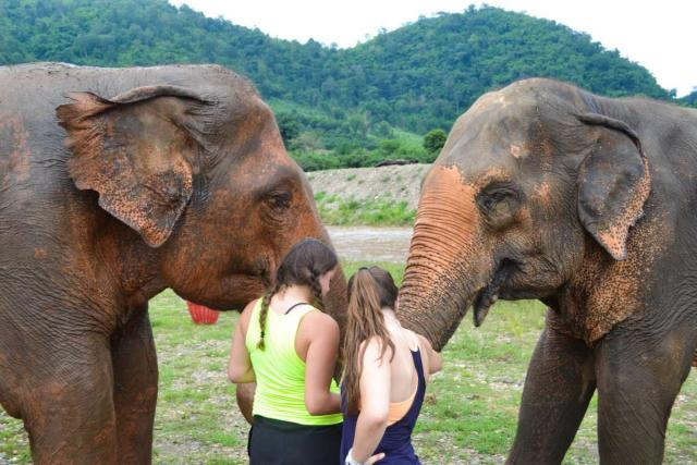 Teenage travelers work with elephants during summer youth travel program in Thailand