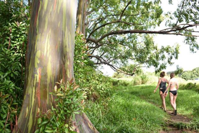 Teens take a nature walk in Hawaii on their summer service program.