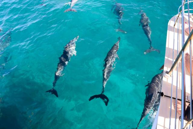 Teens watch dolphins swim alongside their boat on a summer student travel program in Hawaii.