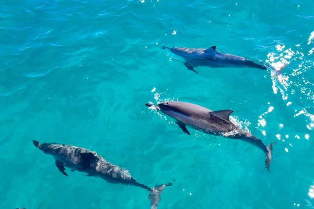Students observe dolphins in the water during their summer service program in Hawaii.