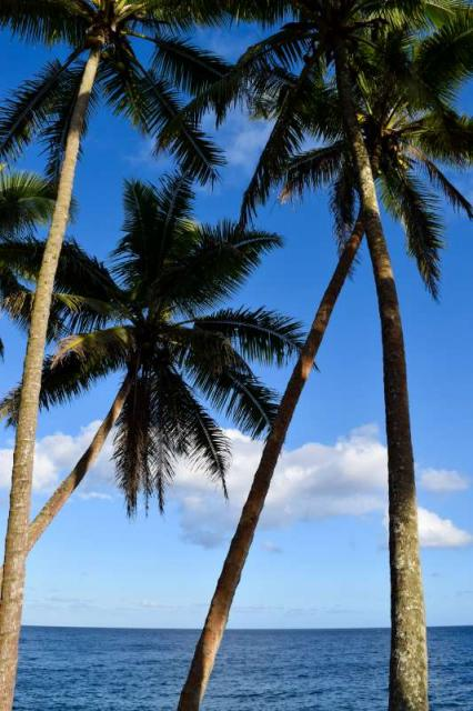 Students enjoy the shade of palm trees on the beach during their summer teen tour of Hawaii.