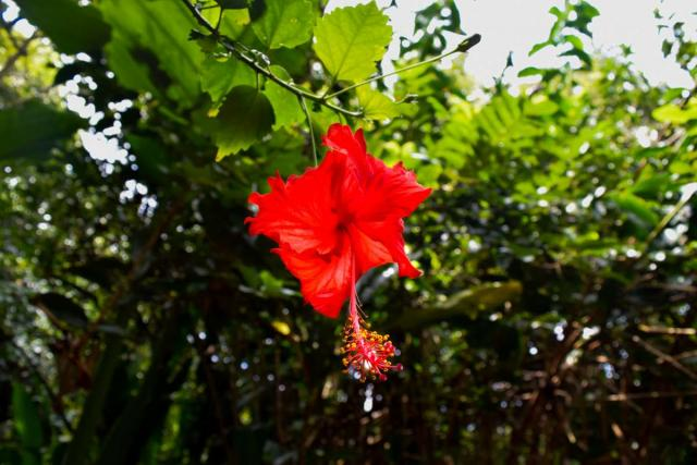 Students capture a photo of a flower in Hawaii on summer teen travel program.