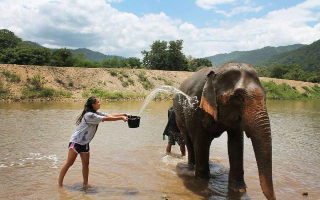 Teenage volunteer traveler washes elephant during summer youth travel program in Thailand