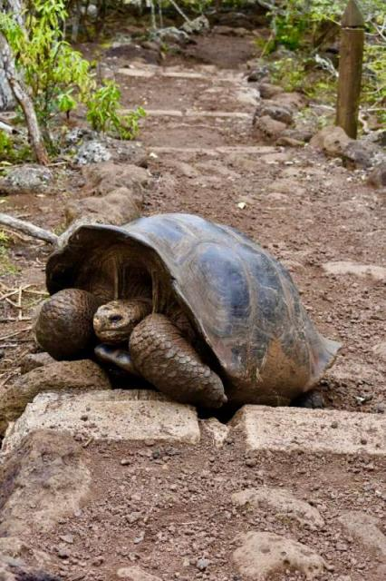 Teens photograph a tortoise on their travel tour of Ecuador and the Galápagos Islands.