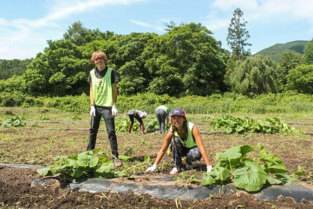 American teenagers volunteer farming community service during summer youth travel program in Japan