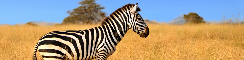 Safari wildlife teens see on trips during summer travel programs