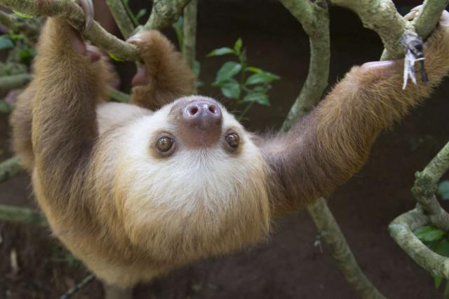 Students watch a sloth climb through the trees on their summer service program in Costa Rica.
