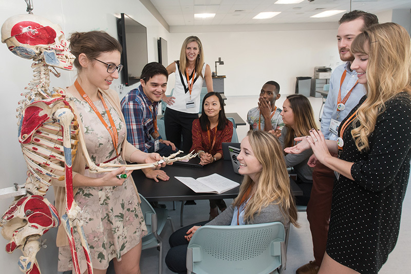 Medical school students look at a skeleton model as a group