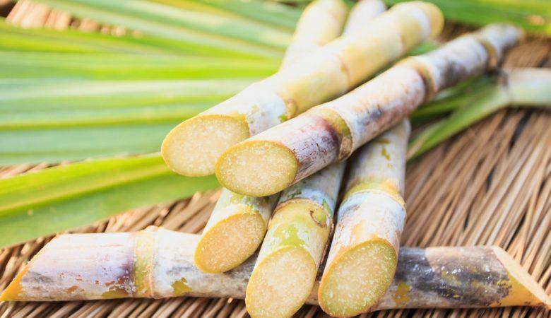 Descubra agora como otimizar a produção de cana-de-açúcar