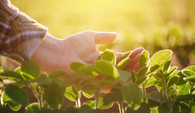 Conheça os benefícios do uso da tecnologia na produção de soja