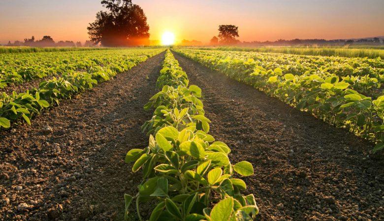 Conheça os 5 principais desafios do agronegócio no Brasil