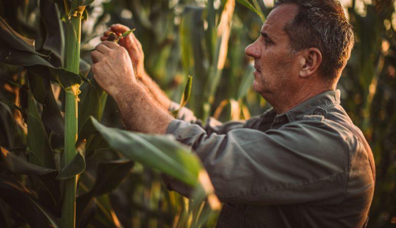Quais os tipos de fertilizantes mais utilizados na agricultura?
