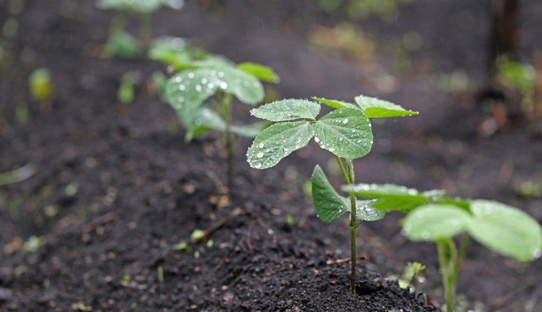 Saiba como realizar o aproveitamento da água da chuva na agricultura