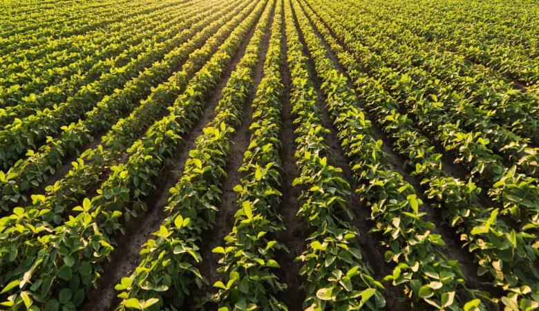 5 Dicas para otimizar os resultados da produção agrícola no verão