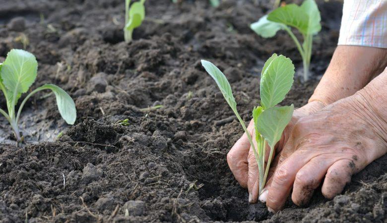 Aprenda como reduzir o desperdício de fertilizantes e sementes na agricultura