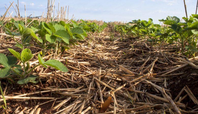 Saiba agora o que é agricultura consciente e como desenvolvê-la