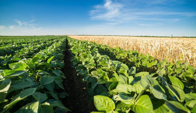 3 tendências da agricultura orgânica para você conhecer