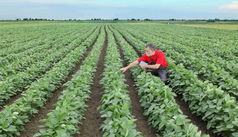 3 melhores dicas para reduzir perda na colheita e evitar prejuízos