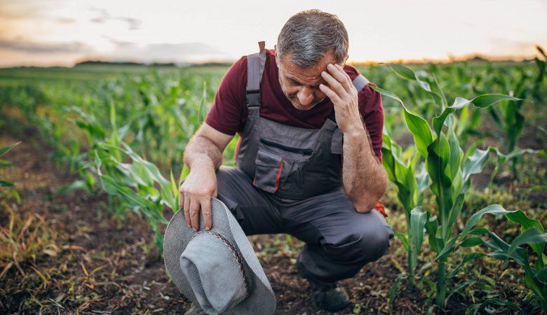 7 principais doenças do solo e como preveni-las de forma adequada