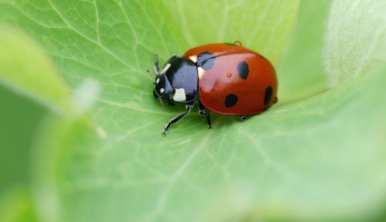 Afinal, como fazer o controle biológico de pragas na agricultura?