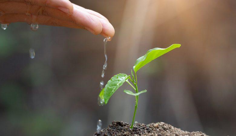 Conheça os benefícios da biotecnologia na agricultura