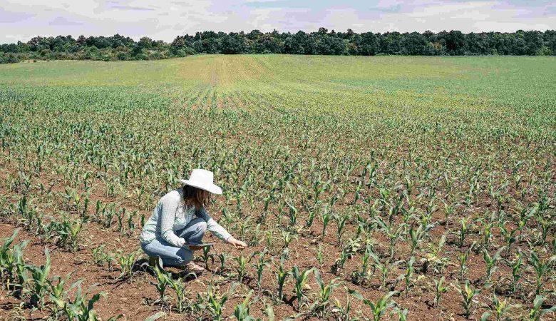 Quais são as etapas das cadeias produtivas do agronegócio? Entenda