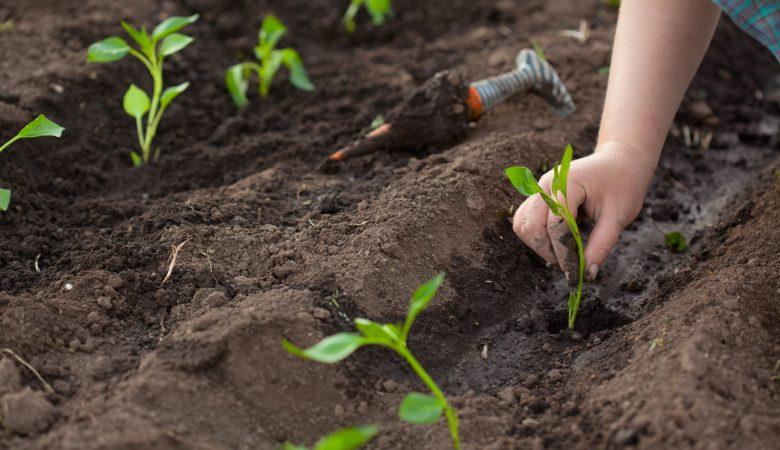 9 Dicas para melhorar o controle de pragas da sua propriedade rural