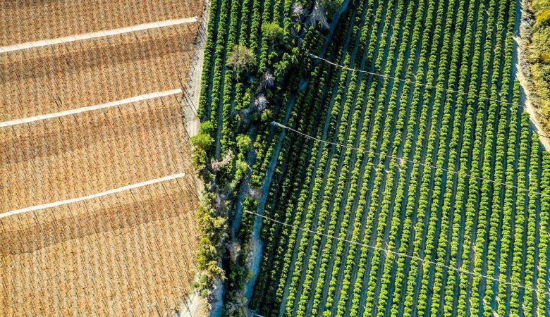 Entenda o que é plantabilidade, como ela funciona e qual seu papel na lavoura