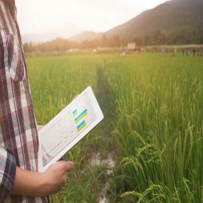 Insumos agrícolas: conheça a importância de um gerenciamento eficaz