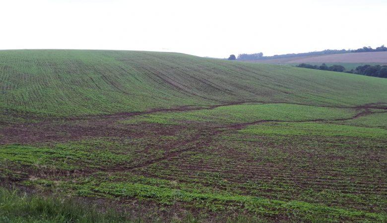 Degradação do solo: descubra agora quais são as principais causas