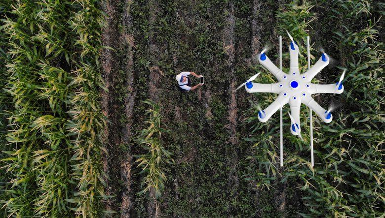 Fique por dentro das maiores tendências da agricultura no Brasil