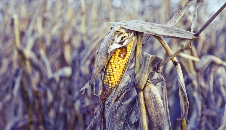Entenda como minimizar as perdas de alimentos na agricultura