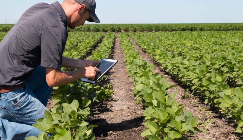 Planejamento de plantio: saiba qual a importância e como fazê-lo
