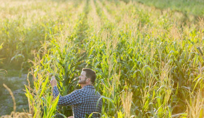 5 dicas indispensáveis para melhorar sua produção agrícola