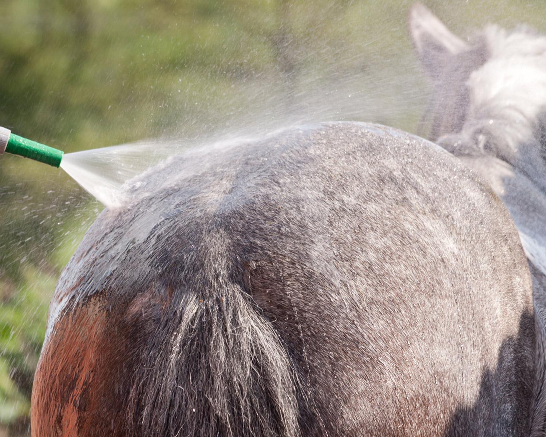 3 maneiras de manter a cauda do seu cavalo