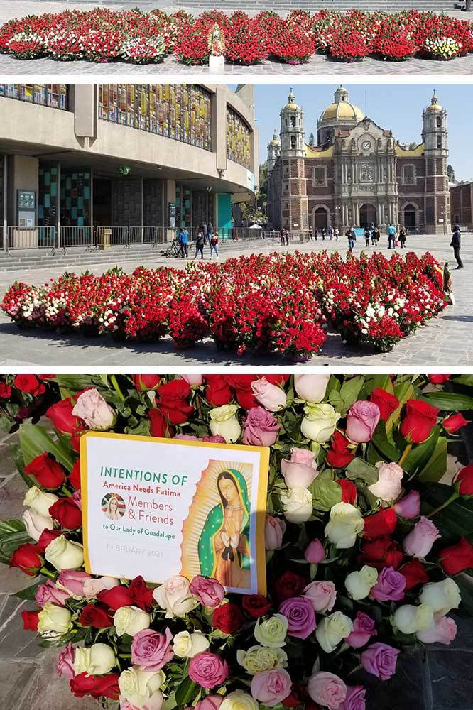 Roses in Mexico - February 2021
