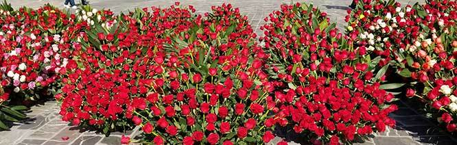 Red Roses to Our Lady for Valentines