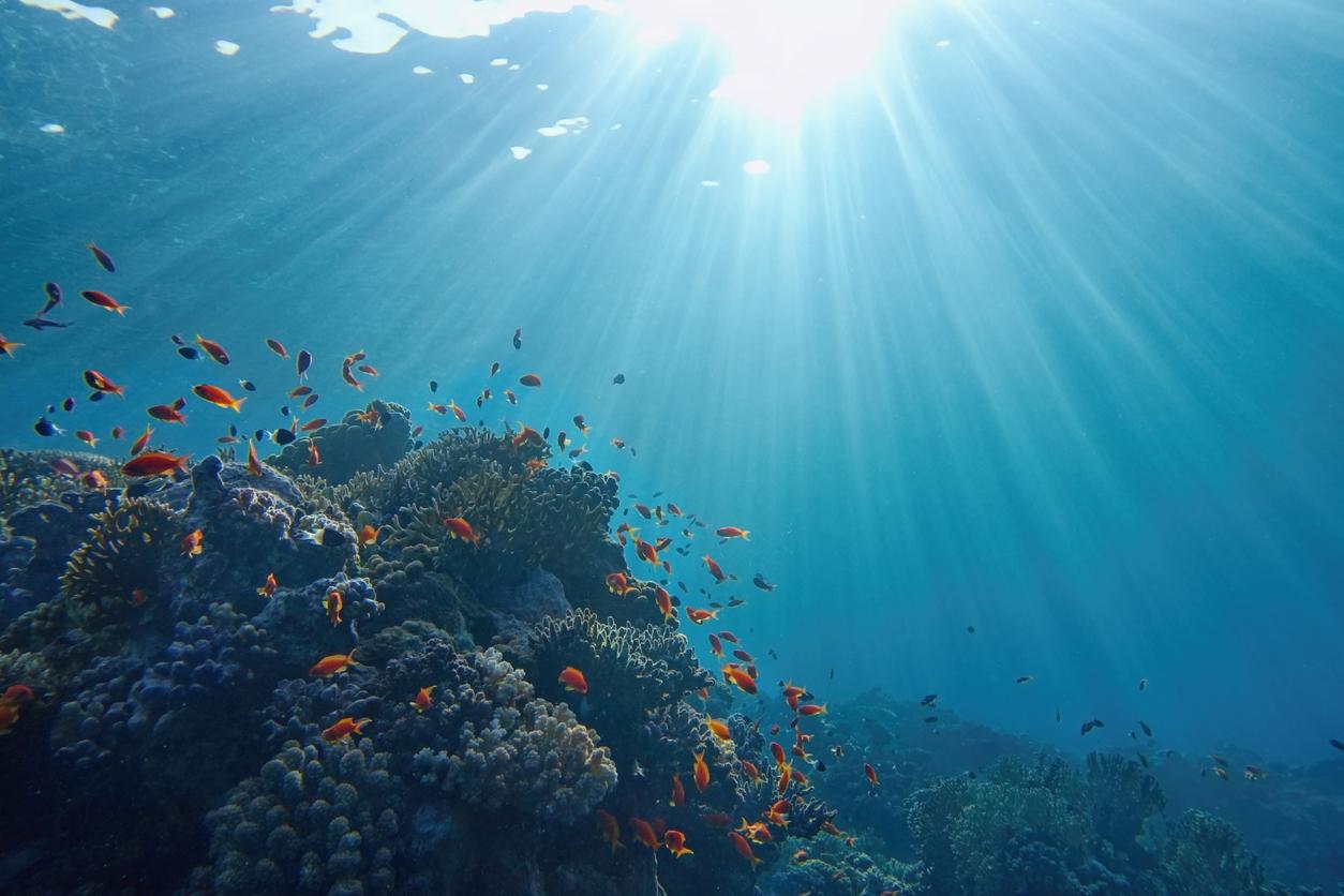 Underwater i Stock