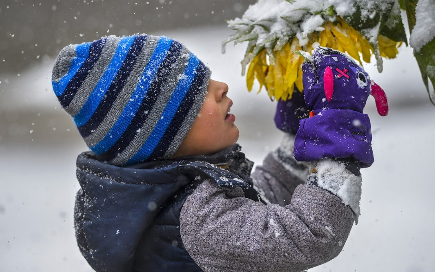Early snow hits northern Rockies