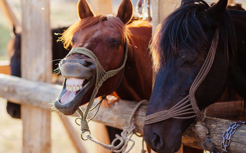 More horsing around