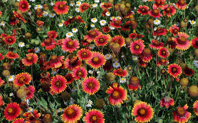 The wonders of wildflowers
