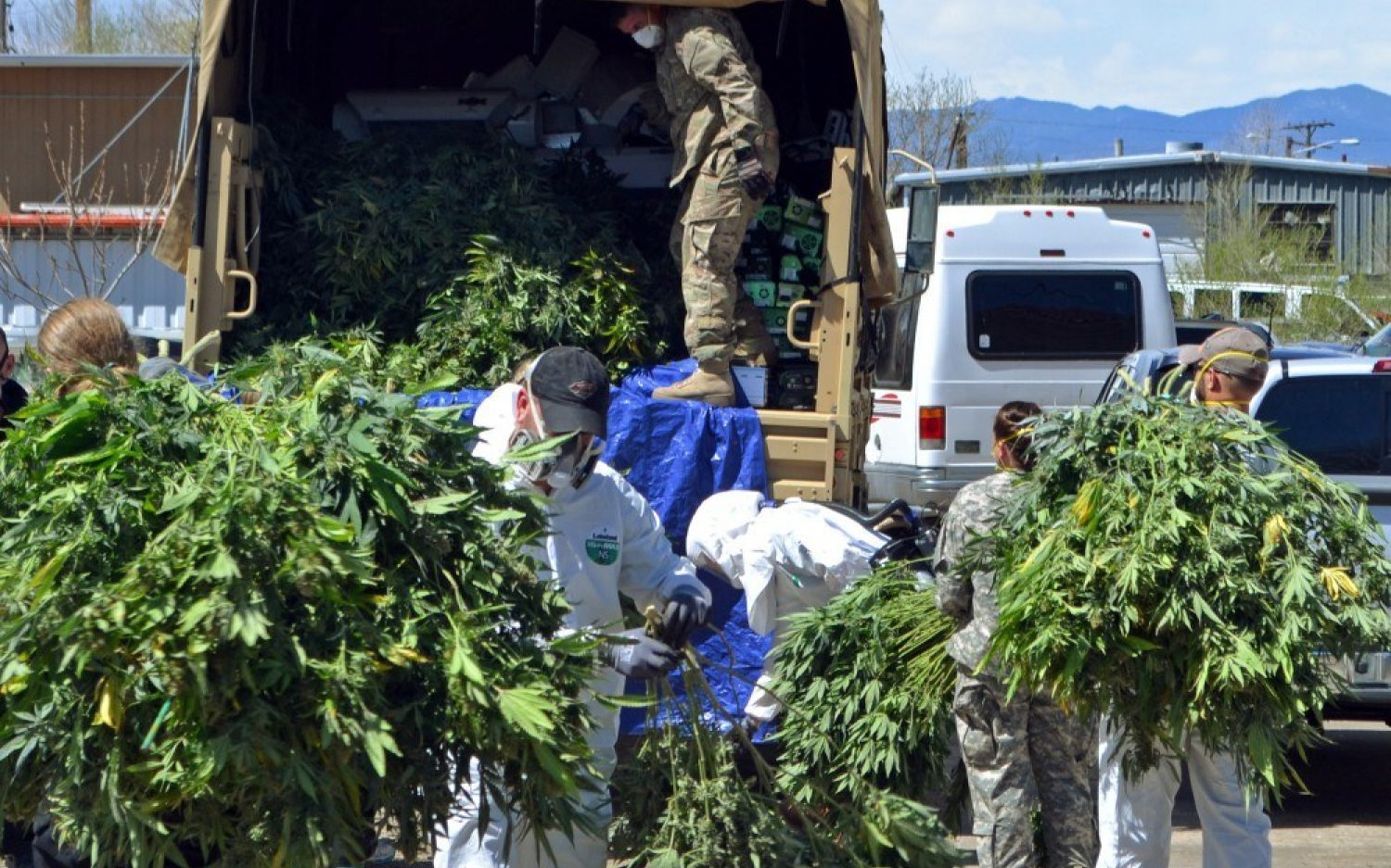 Legal pot is sowing seeds of illegal growing operations in Colorado