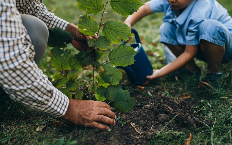 History, stewardship, and community