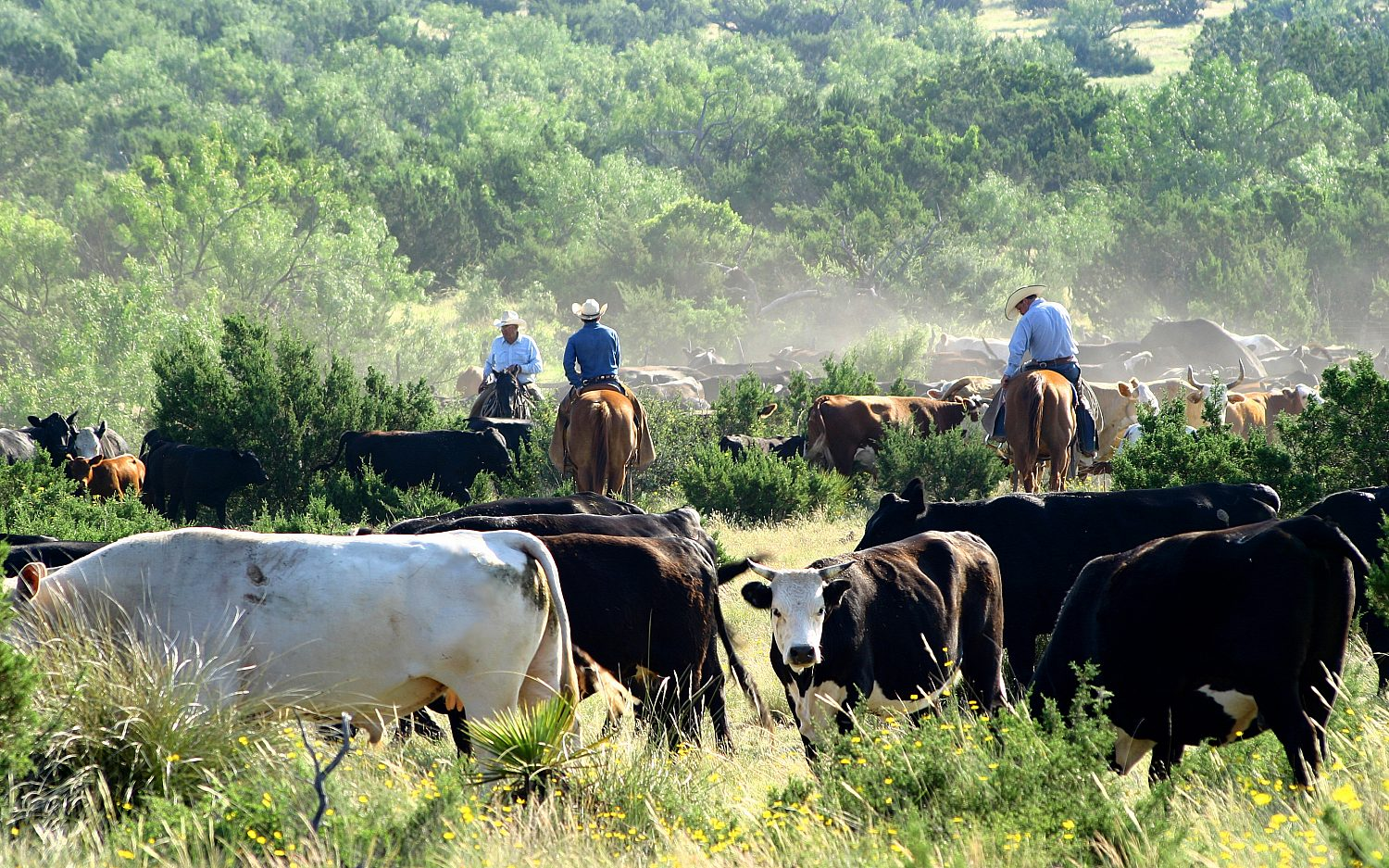 A year in the life of a ranch